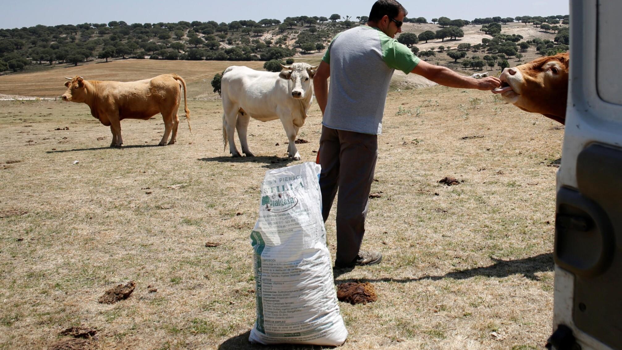 Spanien og Italien er ramt af værste tørke i årtier | Udland | DR