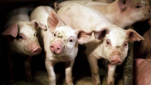 Konkurs truer 15 procent af de danske landmænd