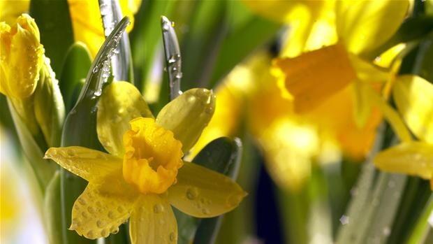 Derfor er der mange helligdage i påsken | Ligetil | DR