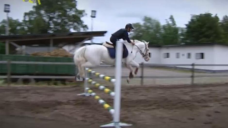 Ponyskolen (13)