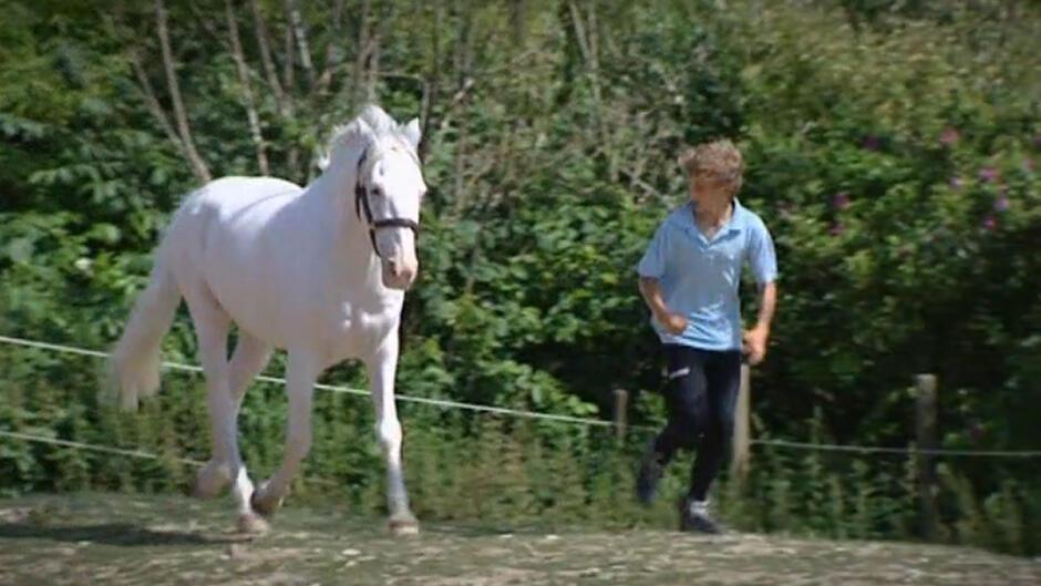 Ponyskolen (16)