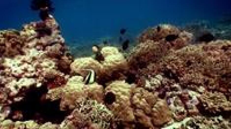 NØRD: På eventyr i Papua (1:3)