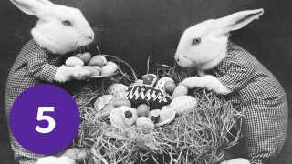 Mange kaniner har igennem tiden været tvunget til at stå model til historien om påskeharen - i mangel på hare.