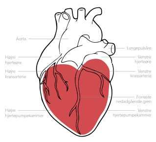 Det menneskelige hjerte og det symbolske hjerte i et billede.