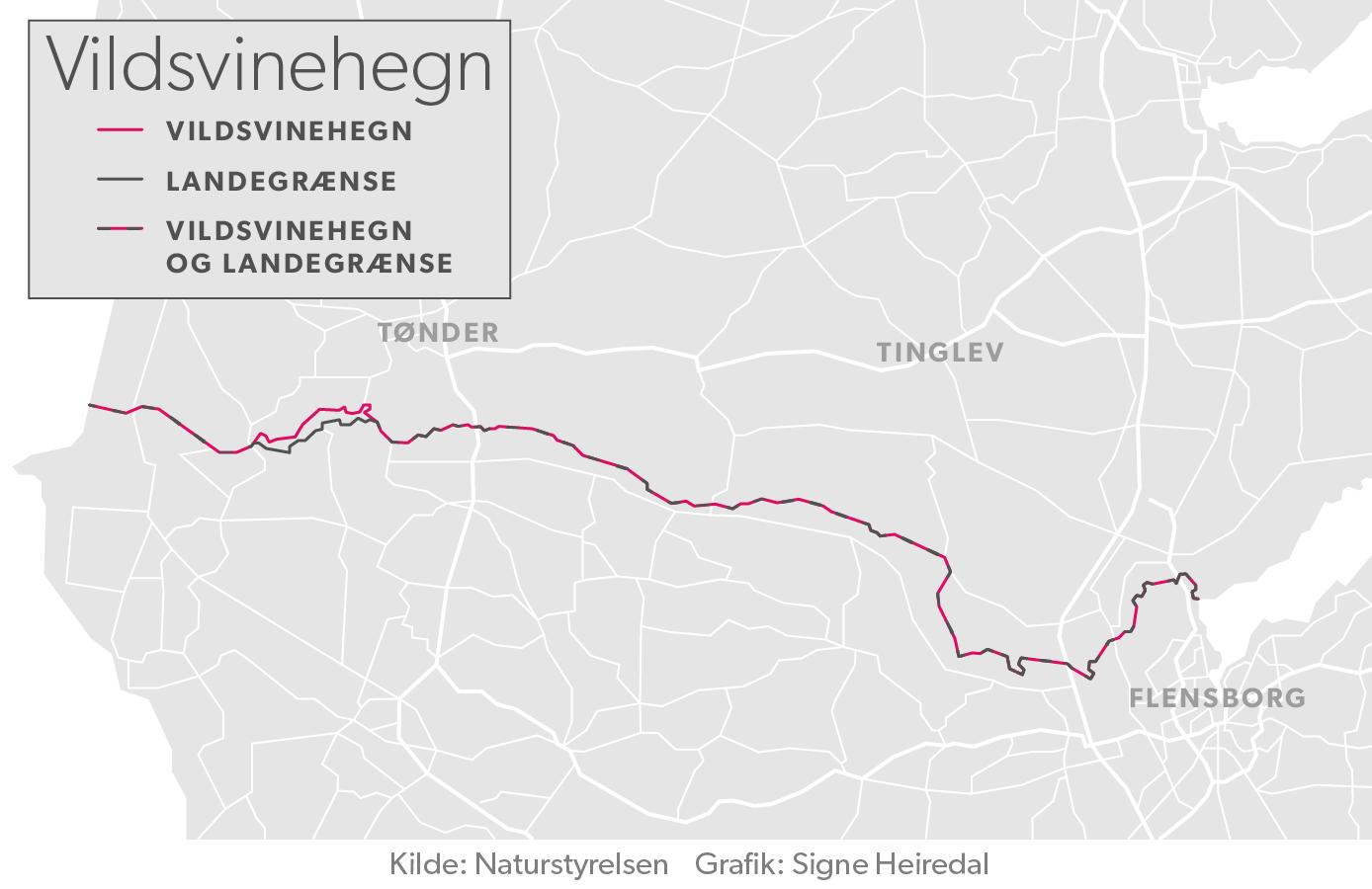 Vildsvinehegnet skal stort set følge den dansk-tyske grænse. (Foto: Grafik) Signe Heiredal © © (c) DR)