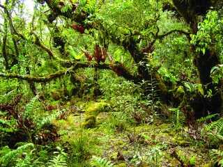 Forskerne bag stort studie mener, at Luzon rummer den største koncentration af unikke arter i verden.