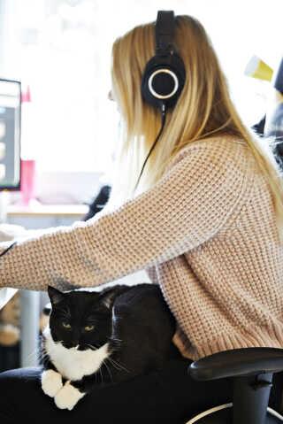 Maries kat, Misser, vil rigtig gerne være med, når Marie er på computeren. Misser hopper tit op til hende og finder sin plads.
