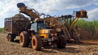 Godt nok kalder man bioethanol for grøn energi - men bagsiden af OL-medaljen kan være tab af regnskov. Indianerstammer protesterer over, at produktionen af sukkerrør har frarøvet dem deres hjem - regnskoven. Her bliver sukkerrørene høstet nær byen Piracicaba i São Paulo-stat. - Billedet er fra maj 2009.
