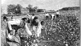 Slaver blev blandt andet brugt i bomuldsplantager - som på illustrationen her fra magasinet 'La Science Illustree' fra slutningen af 1900-tallet.