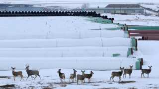 Rørene til Keystone XL ligger klar til brug i Gascoyne i North Dakota.