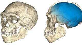 Her ses en af de computergenerede rekonstruktioner af kraniet, som forskerne har lavet ud fra fund af knogler ved udgravningen.