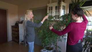 Elisabeth Schindler og hendes datter pynter en plante i lejlighenden med en lyskæde. Julepynt er heller ikke noget, familien har råd til. (Foto: Siri Olesen)