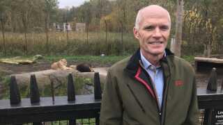 Direktør i Odense Zoo, Bjarne Klausen, står foran løvernes anlæg, mens hanløven og en hunløve hviler sig på en opvarmet sten i baggrunden. De små løvekillinger kommer først ud i anlægget, når de er parate til det.