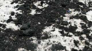 Vi kender godt de småstikkende, meget sprøde tangruller på stranden. Det er gaffeltang.