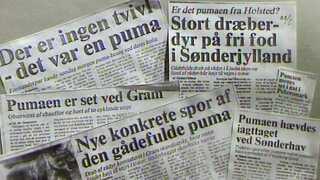 Avisudklip fra 1980'erne med historier om den flygtige puma.