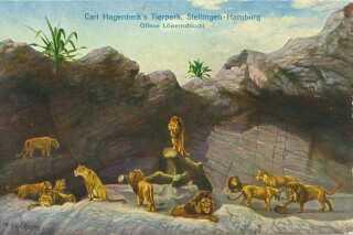 Postkort fra Hagensbecks dyrepark.