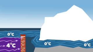 Muren blokerer for den 4 grader varme havstrøm, så den ikke når bunden af gletscheren og får den til at smelte.
