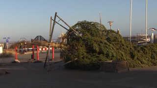 Juletræet på Hirtshals Havn måtte give fortabt i kampen mod blæsevejret.