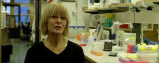 Catharina Svanborg er professor i klinisk immunologi på Lund Universitet. Hun leder forskningsgruppen, der arbejder med kroppens eget forsvar mod infektioner og kræft.