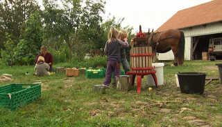 På Stenbjerglykke laver de deres egen most. Her er de to ældste børn ved at presse æbler.