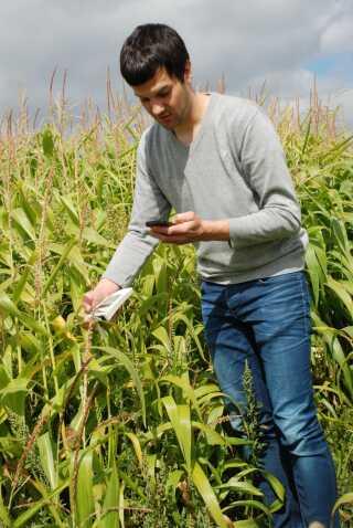 Andreas Carstensen står her i en majsmark og tester fosfor-måleapparatet og den tilknyttede app til smartphonen.