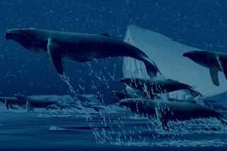 Pukkelhvalerne svæver rundt til musikken i Disneys 'Fantasia 2000'  og det var med til at få Oliver Wollernberg Christensen til at blive fanget af de klassiske toner.