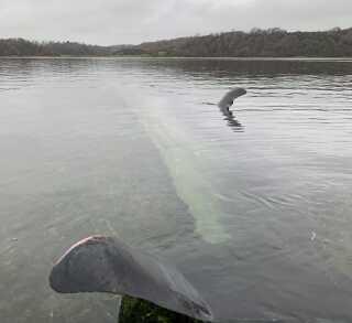 Jens Fisker tog billeder kort efter de havde fundet hvalen omkring 13.00 fredag.