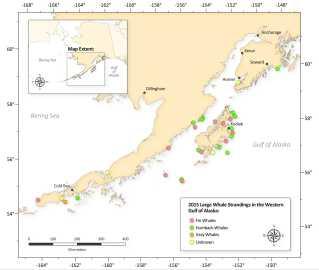 Kortet viser hvor hvalerne er strandet indtil 14 august.