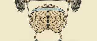 Hjernen bliver stærkere, friskere og mere modtagelig overfor indlæring, hvis du dagligt udfordrer den, lyder budskabet i den nye bog, Hjernestarter.