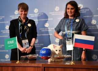 Achilles the cat, one of the State Hermitage Museum mice hunters, attempts to predict the result of the opening match of the 2018 FIFA World Cup between Russia and Saudi Arabia during an event in Saint Petersburg, Russia June 13, 2018. REUTERS/Dylan Martinez