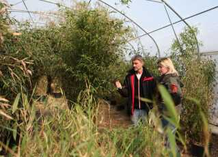 Pandaernes spisekammer ved Vordingborg bugner med bambus. Der kommer til at være i alt otte forskellige sorter på de syv hektar jord med bambus.