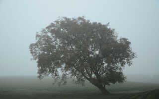 Dis og tåge er typisk efterårsvejr.