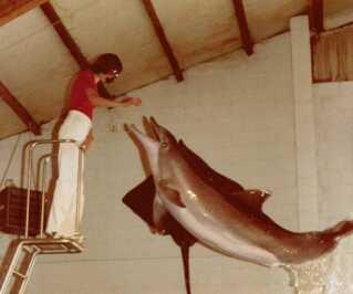 En unge Hanne Toft Kürstein træner delfiner på Ulstrup Slot.