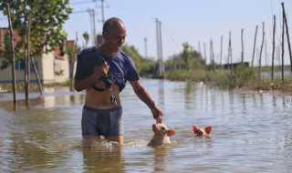 Kina: Oversvømmelser. Skader: 61 milliarder kroner. Landet blev ramt af heftig regn og store oversvømmelser i juli og august. Her forsøger en mand og to grise at forcere vandmasserne i Shouguang efter orkanen Rumbia i august.