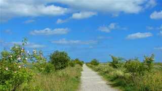 Solskin og blå himmel. Sommeren i år bliver pæn, lover DMI.