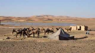 Sahara kan vøre uden regn i flere år, og så kommer der et år, hvor der kommer tordenbyger lige som i dag.