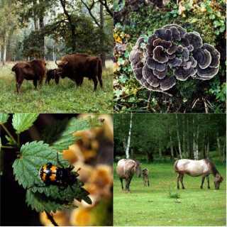Bialowieza-skoven har et unikt dyre- og planteliv. Her er bisoner, vilde heste og 1.500 svampearter.