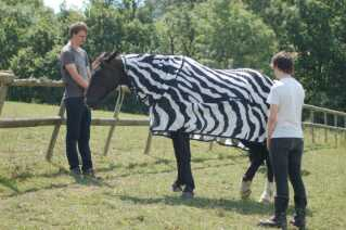 Heste i 'pyjamas'-udklædning bekræftede forskernes teori. Billede: School of Biological Sciences, University of Bristol