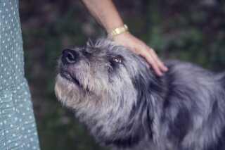 Den kan virke naturligt at trøste din hund, hvis den bliver bange for en høj lyd. Men det bedste du kan gøre er, at opføre dig helt normalt for at signalere, der ikke er noget at være bange for.