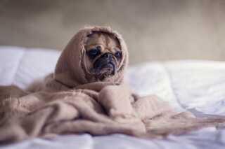 Hunde er meget sensitive med lugte. Så det kan virke beroligende at give hunden et tæppe eller en trøje, der lugter af ejeren.