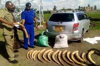 Elefantstødtænder fundet i Kenya.