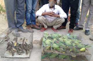 Levende fugle af arterne Stor Alexanderparakit og Astrild beslaglagt af politi i Indien.