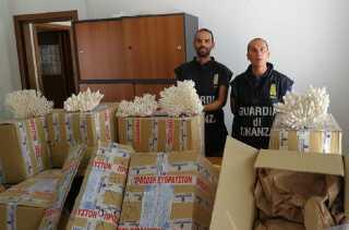 Også truede koraller er blevet konfiskeret af politiet. Her italienske told-betjente, der har fanget en båd, der forsøgte at smugle koraller fra Grækenland til Frankrig.