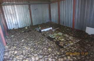 I en container på vej til at blive afskibet fra Kazakhstan fandt russiske myndigheder 4.100 russiske landskildpadder.