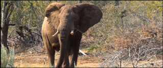 Foto fra Lamai Safaris præsentationsvideo på Youtube.