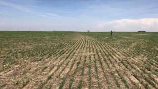 Flere steder i verden kan folk se frem til lange tørkeperioder i fremtiden. Også i Kansas, USA. 2017 er netop blev opgjort til at være det varmeste år i USA nogensinde.