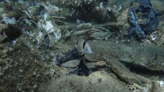 Fisk svømmer ved siden af plastik på bunden af havet ved øen Andros i Grækenland. Havforureningen ved øen menes at stamme tilbage fra 2017, hvor kraftigt regn fik bunker af affald til at kollapse og falde i havet.