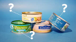MSC-mærket er det, du skal gå efter, hvis du gerne vil købe bæredygtigt tun.