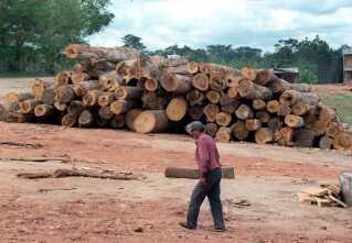 """Tømmerkoncession i Regnskoven ved Ascencion de Guarayas i Bolivia, Her fældes mahogni og andre """"hård-træ""""-sorter. Man tager et lille stykke af skoven og fælder enkelte træer, derpå tager man et nyt stykke og efter ca. 30 år vender man tilbage til dette stykke regnskov."""