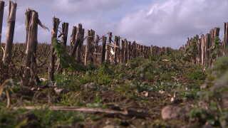 Marken, der tidligere var en majsmark, skal tilplantes med byg til ølproduktion. På marken ved siden af vil Jonathan Nielsen plante havre, der skal sælges som gryn.